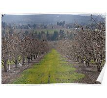Oregon Vineyard Poster