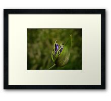The lily awakes Framed Print