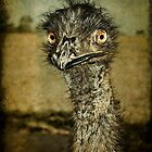 Mr Emu is a curious chap... by scottimages