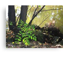 Foliage Along the Banks of The Seine Canvas Print