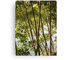 Trees - Linear pattern Canvas Print