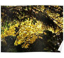 Golden Autumn Leaves Poster