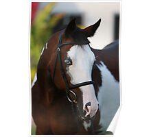 Magnificent Horse Portrait Poster