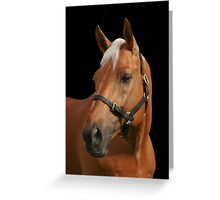 Palomino Stallion Greeting Card