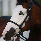 Equine portrait by Jo McGowan