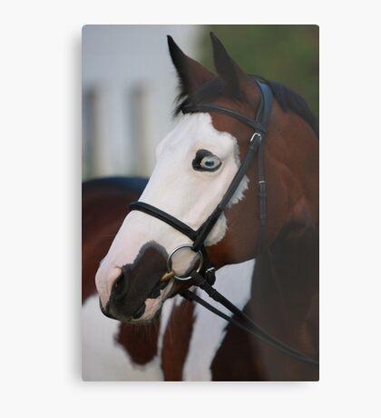 Equine portrait Metal Print