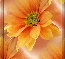 sunshine by cynthiab