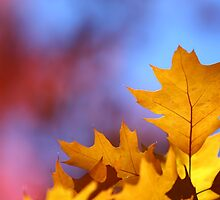 Fallen Leaves by Candler Photography