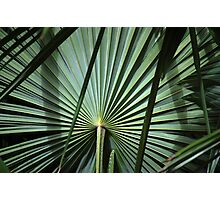 The righteous shall flourish like the palm tree.-Bible quote Photographic Print