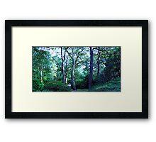Isabella Plantation Framed Print