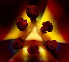 true beauty comes from the inside by CvDolleweerd