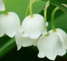 Lily of the valley for grandma Sticker