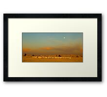 Sheep and Twilight Framed Print
