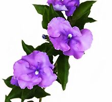 Purple On White  by heatherfriedman