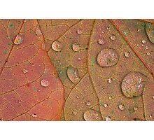 Redbud Leaves Photographic Print