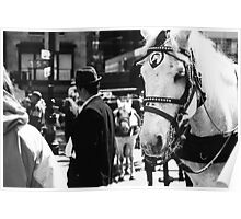 New York Horse Poster