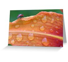 a bugs life Greeting Card