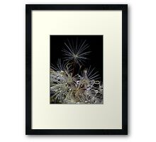 Reaching for the Stars. Framed Print