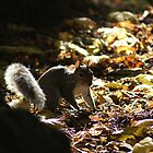 squirrel, in the morning by mrsquickers