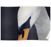 A Swans Eye Poster