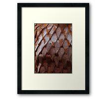 Rusty Armour Framed Print