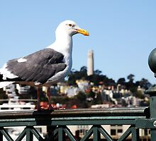 Sea Gull over Coit Tower by Benjamin Padgett