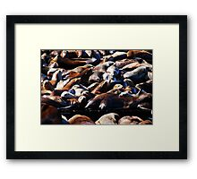 Band of Sea Lions Framed Print