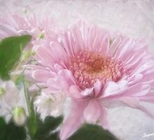 Pink Chrysanthemums 4 by Christopher Johnson