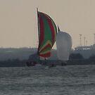 Rainbow sails by jackie martino