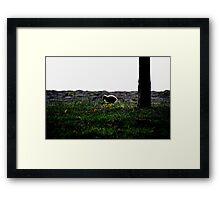 golden gosling  Framed Print