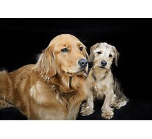 Golden Retriever and Dachshund Puppy - a sweet couple Photographic Print