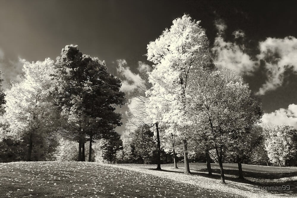 """"""" It is Black and White """" by canonman99"""