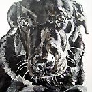 Sophie black lab by artist Debbie Boyle - db artstudio by Deborah Boyle