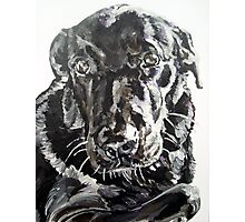 Sophie black lab by artist Debbie Boyle - db artstudio Photographic Print