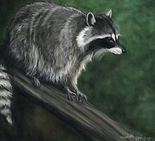Racoon by Charlotte Yealey
