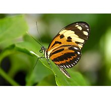 Round Winged Butterfly  Photographic Print