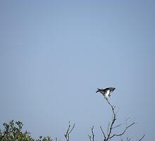 Osprey At Green Key Park, New Port Richey,Fl  #2 by Junebug60