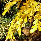 Yellow leaves by Shulie1