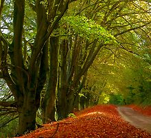 Country Lane in Autumn by lightmonger