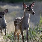 Fawns by BartElder