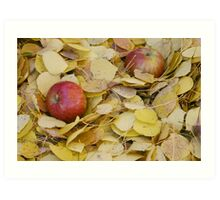 Two Apples in bright yellow leaves Art Print