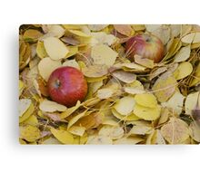 Two Apples in bright yellow leaves Canvas Print