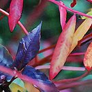 Leaf Study Number 4: Autumn Rainbow by Greg German