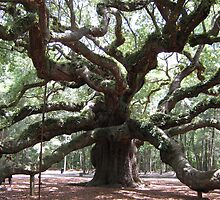 Angel Oak by SpaceKace