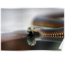 Snake Reflecting Poster
