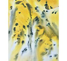 Leopard Skin Photographic Print