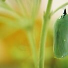 Chrysalis in Green and Gold by BecQuist