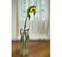 Lensbaby Still Life Photographic Print