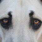 """Sadie - """"Look into my eyes!"""" by Kent Burton"""