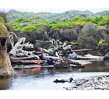 Driftwood, outside Waldport, Ore. Photographic Print